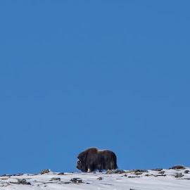 by Sverre Sebjørnsen - Animals Other