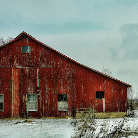 Weathering the incoming snow storm by Brenda Reed Buehler - Buildings & Architecture Other Exteriors ( wind, old, red, barn, snow, scenic, storm, country )