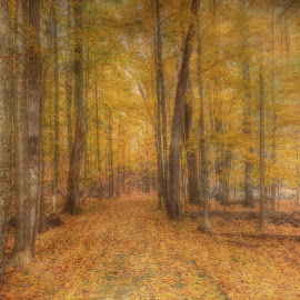 Autumn's Alluring Mystique by Millieanne T - Digital Art Places