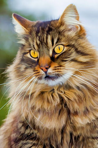 by Albin Bezjak - Animals - Cats Portraits ( cutest cats )