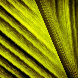 Through the Leaf by Anatoliy Kosterev - Abstract Macro ( macro, translucent, pattern, abstract, leaf )