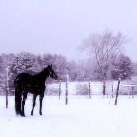 by Kirsi Bertolini - Landscapes Prairies, Meadows & Fields