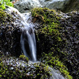 by Ayse Artun - Nature Up Close Water ( renewal, green, trees, forests, nature, natural, scenic, relaxing, meditation, the mood factory, mood, emotions, jade, revive, inspirational, earthly,  )