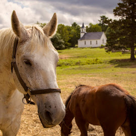 Horses in field by Margaret Pitre - Novices Only Pets