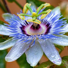 by Judy Rosanno - Nature Up Close Natural Waterdrops