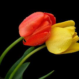 by Biljana Nikolic - Flowers Flower Buds