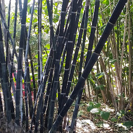 Bamboo 4 by Gail Marsella - Nature Up Close Gardens & Produce ( bamboo, green, san diego botanical garden, garden, black )