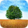 Trees Tile Puzzle APK for Bluestacks