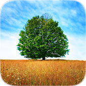 Trees Tile Puzzle APK Descargar