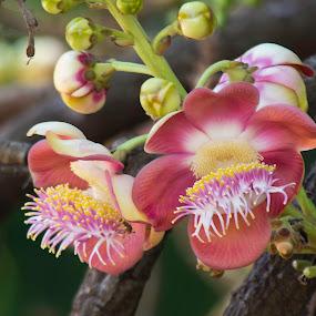 Wildflower by Trevor Smart - Flowers Flowers in the Wild ( local scrub, bellamack, wildflower, australia, northern territory, palmerston,  )