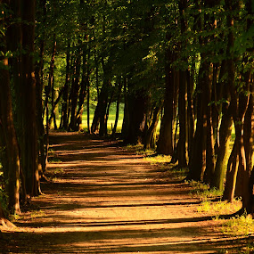 A walk in the park by Roman Kolodziej - Landscapes Forests ( park, path. walk, trees, summer )