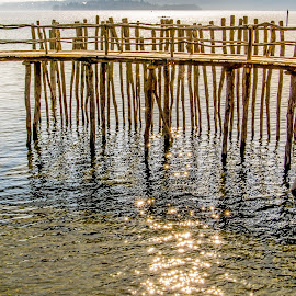 Stars in Lake Constance by Linda Brueckmann - Landscapes Waterscapes