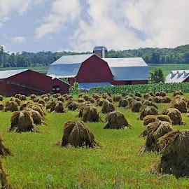 Amish Farm by Nancy Young - Landscapes Prairies, Meadows & Fields ( barn, hay, farmland, haystacis )