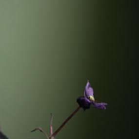 Violet Survivor by Ferhan Mazllami - Nature Up Close Flowers - 2011-2013 ( plant, still life, violet, beautiful, flowers, pots, natural, viola )