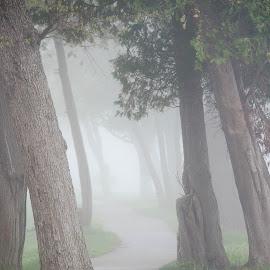 Walking path in the mist by Wilma Michel - City,  Street & Park  Street Scenes