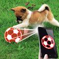 Tease dog ball simulator