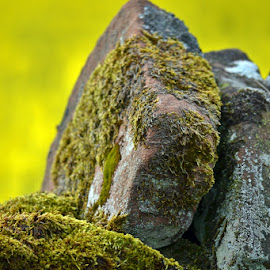 by Terry Gower - Nature Up Close Rock & Stone