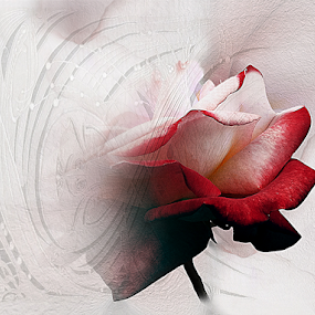 ROSE by Carmen Velcic - Digital Art Abstract ( abstract, red, roses, flowers, digital )