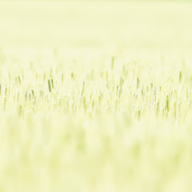 The field by Dragos Vana - Nature Up Close Leaves & Grasses