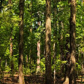 by Amit Baran Sen - Nature Up Close Trees & Bushes (  )