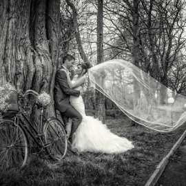 A Quick Kiss by Adrian O'Neill - Wedding Bride & Groom ( love, kiss, tree, bake, veill, bride, mono, groom )