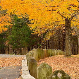 Autumn Scene by Tarea J Roach-Pritchett - Landscapes Forests ( forests, autumn, trees, fences, yellow,  )