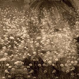 Memories of past by Zenonas Meškauskas - Digital Art Abstract ( field, face, woman, memories, dandelions )