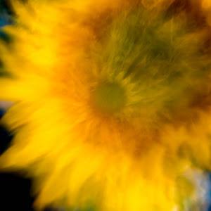 2018-07-27 Sunflowers (401 of 455).JPG