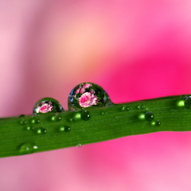 by Laimonas Šepetys - Nature Up Close Natural Waterdrops