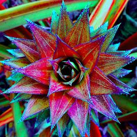 by SHAMEEM ET - Digital Art Things