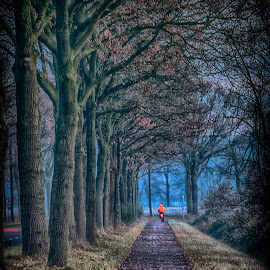 in the distance by Egon Zitter - City,  Street & Park  City Parks ( path, forest, road, parc, woods, bicycle )