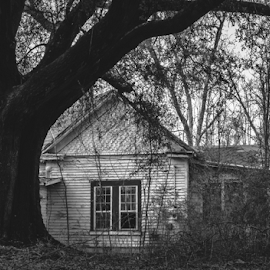 White House.  by Trey Walker - Novices Only Objects & Still Life ( nature, tree, black and white, house, abandoned )