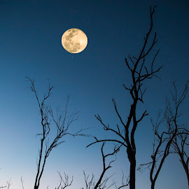 Moon by Gurung Purna - Nature Up Close Trees & Bushes ( moon, tree, bushes, waiting for rain, night )