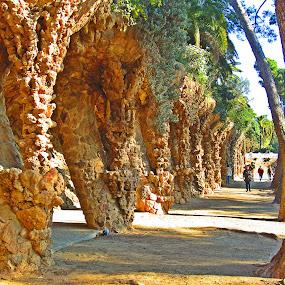 by Bica Razvan - City,  Street & Park  City Parks (  )