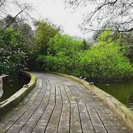 Birds by Laura Giri - City,  Street & Park  City Parks ( #london #park #landscape #photooftheday )