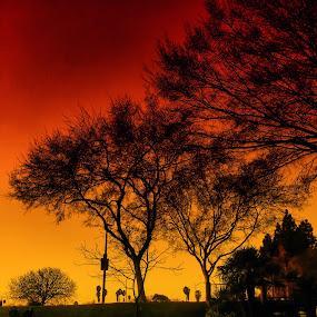 Brigadoon by Rachel Santellano - Landscapes Travel ( park, silhouette, sunset, trees )