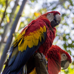 Aves Color by Benjamin Dean - Animals Birds