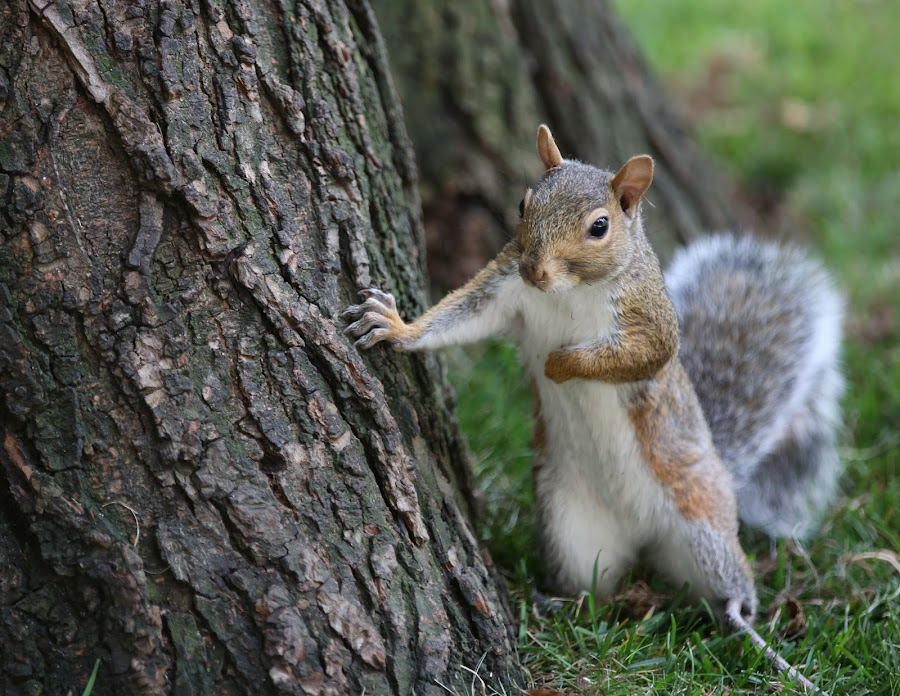 The Conversation by VAM Photography - Animals Other Mammals ( animals, park, nature, nyc, places, squirrel,  )