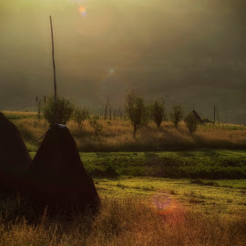 Brothers in the morning light by Attila Ádám - Landscapes Sunsets & Sunrises ( green, hay, haybales, sunrise, morning, light )