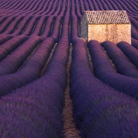 Lavender House by Pawel Uchorczak - Landscapes Mountains & Hills ( provence, lavender )