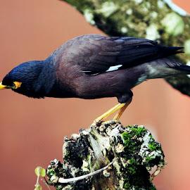 Alone by Santanu Maiti - Novices Only Wildlife ( bird, morning, alone )