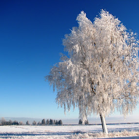 by Rita Bugiene - Nature Up Close Trees & Bushes ( , snow, winter, cold )