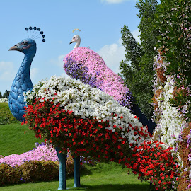 Peacock by Tony Baino - City,  Street & Park  City Parks ( flowers )