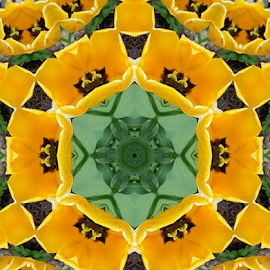 Golden Kaleidoscope by Nancy Bowen - Novices Only Flowers & Plants ( photo manipulation, tulips, flowers )