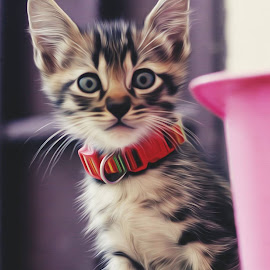 by Syed Roslie - Animals - Cats Kittens