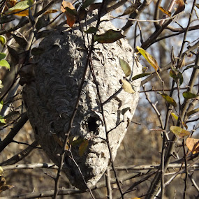 by Thomas Godersky - Nature Up Close Hives & Nests