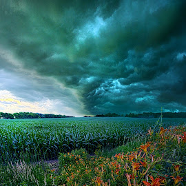 After Thought by Phil Koch - Landscapes Weather ( vertical, arts, fine art, travel, yellow, storm, love, sky, nature, weather, flowers, light, trending, colors, twilight, art, mood, journey, horizon, rural, portrait, country, dawn, environment, season, serene, popular, outdoors, lines, natural, hope, inspirational, canon, wisconsin, ray, joy, landscape, sun, photography, life, emotions, dramatic, horizons, rain, inspired, clouds, office, heaven, camera, beautiful, scenic, living, morning, field, unity, blue, sunset, peace, meadow, summer, beam, sunrise, earth )