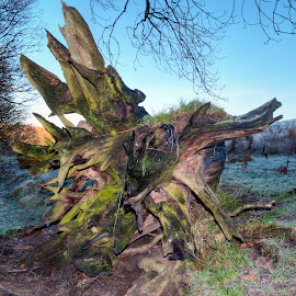Stumped for a title by Stephen Crawford - Nature Up Close Trees & Bushes ( stump, tree, green, angular, dead, decaying, shapes,  )