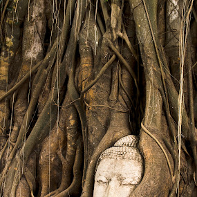 Sandstone Buddha head overgrown by Banyan Tree Thailand by Tanawat Pontchour - Travel Locations Landmarks ( expression, old, root, ruin, thailand, stone, thai, travel, architecture, asian, religion, ancient, tree, spiritual, serenity, pray, head, black, china, symbol, buddah, art, white, tourism, worship, portrait, temple, landmark, sculpture, statue, serene, ayutthaya, meditation, religious, culture, face, decorative, buddhist, sandstone, buddhism, asia, monument, closeup, peaceful, overgrown, faith, sacred, buddha, zen, meditate )