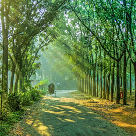 Beauty of Nature by Topu Saha - City,  Street & Park  Street Scenes ( ray, winter, park, nature, street, sunrays, ray of light, beauty, morning, sunbeam, rays )